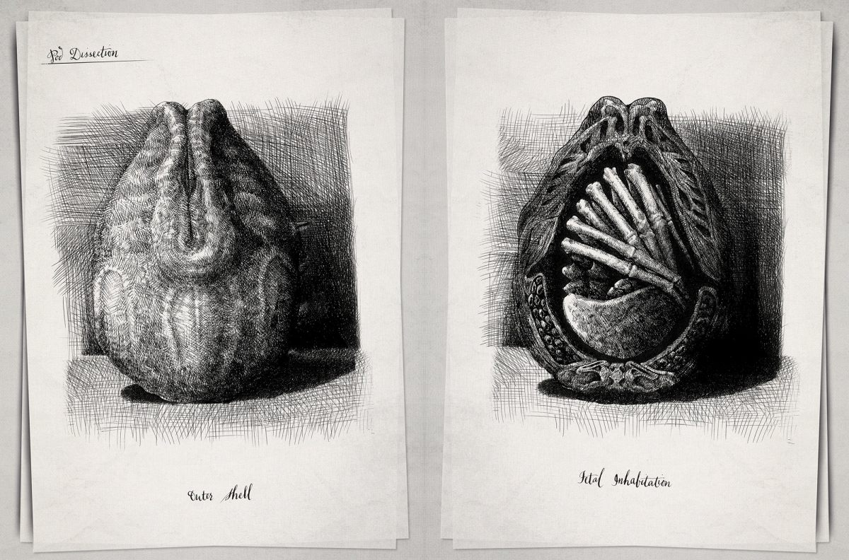 EXCLUSIVE: ALIEN: COVENANT - DAVID'S DRAWINGS Is A Must-Have
