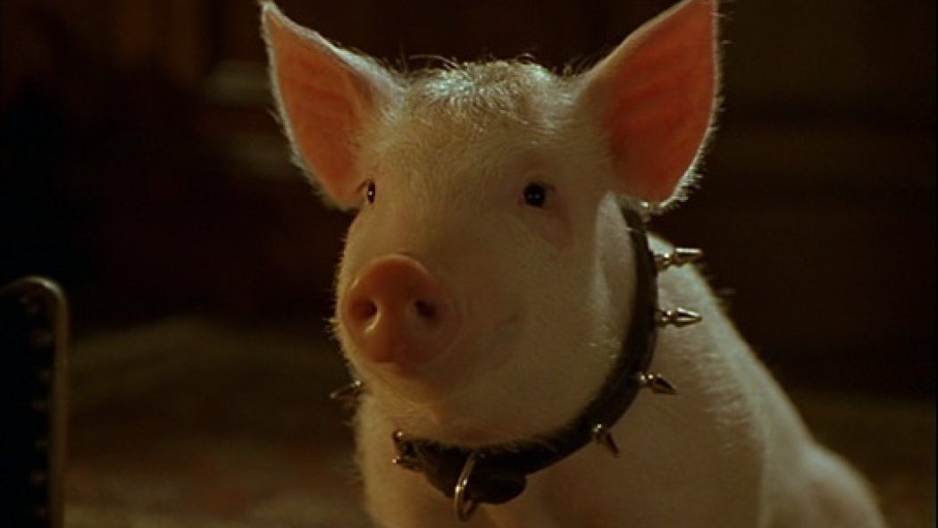 BABE: PIG IN THE CITY And The Punk Pig | Birth.Movies.Death.
