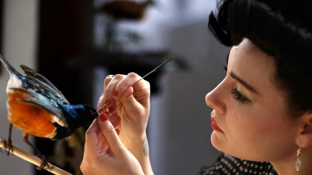 SXSW Review: STUFFED Breathes Life Into The Fascinating Art Of Taxidermy