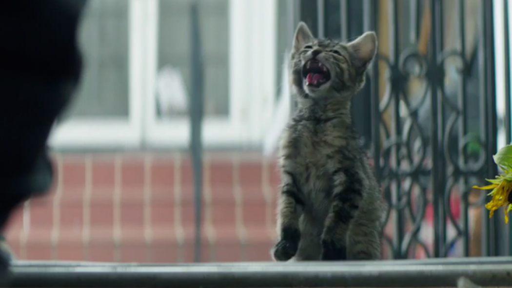 bjork cat video